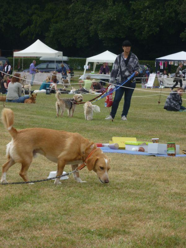 Mensch-Hund-Spass-Parcour-2